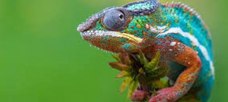 Chameleon Trucking Companies Threaten Lives