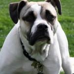 dog bite laws